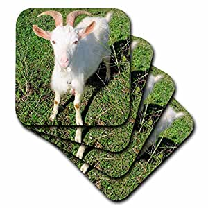3dRose Farm Animals Goat - Ceramic Tile Coasters, set of 4 (cst_21325_3)