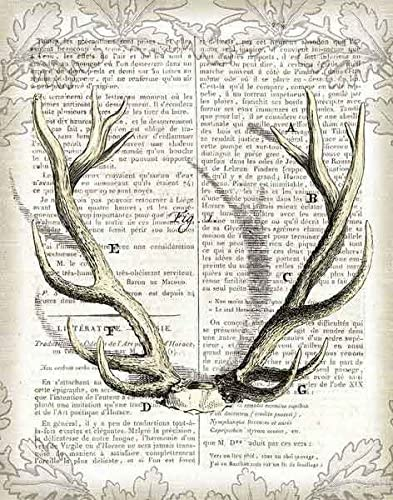 Regal Antlers on Newsprint I Sue Schlabach Deer Animal Nature Print Poster 11x14