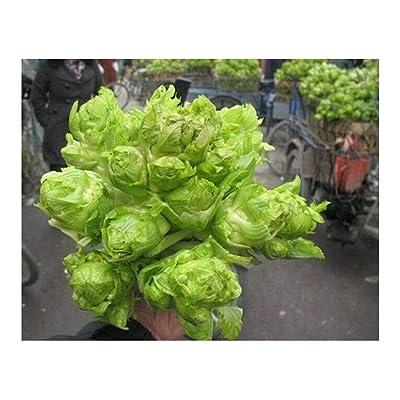 Brassica Juncea Ercai Baby Mustard Asian Sichuan Chinese Vegetable 500 Seeds for Planting GAI Choi 盖菜 芥菜 儿菜 抱子芥 娃娃菜 拳头菜 南充菜 娃儿菜种子 : Garden & Outdoor
