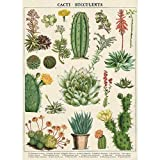 Transport yourself to another time and place with this Cavallini & Co. Cacti & Succulents Decorative Paper Sheet with vintage images from the Cavallini & Co. archives. This beautiful Cacti & Succulents themed decorative paper sheet is...