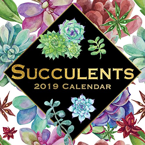 (2019 Wall Calendar - Succulents Calendar, 12 x 12 Inch Monthly View, 16-Month, Blooms and Plants Theme with Echeveria, Cactus, Aloe Vera, Includes 180 Reminder Stickers)