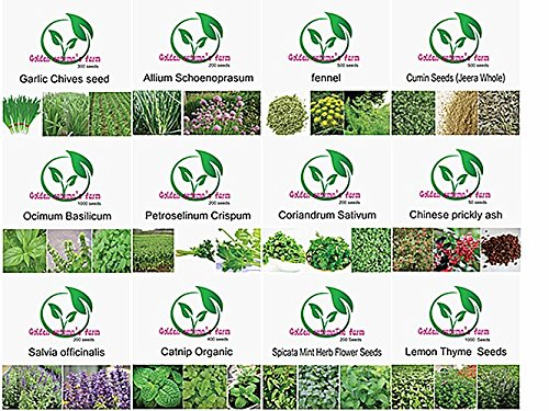 golden-autumn-farm-organic-non-gmo-culinary-herb-set-12-popular-easy-to-grow-herb-seeds