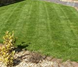 Top Quality Grass Seed / Lawn Seed - (Premium Fine Lawn) - 20kg to cover 571 sq meters - DEFRA registered