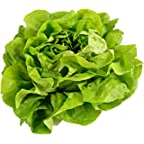 Buttercrunch Lettuce Seeds for Planting | Vegetable Seeds for Planting Outdoor Home Gardens | Heirloom & Non-GMO…