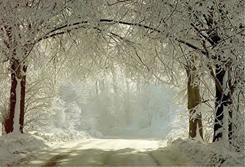 10x6.5ft White Snow Covered Forest Road Photography Backdrop no Crease Winter Photo Background