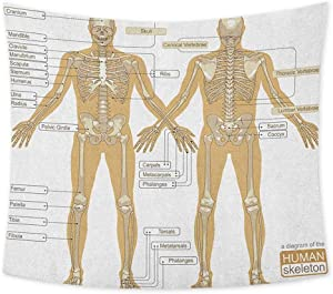 jecycleus Human Anatomy Hippie Tapestry Wall Hanging Diagram of Human Skeleton System with Titled Main Parts of Body Joints Picture Wall Tapestry Bohemian Decor W80 x L60 Inch White Tan