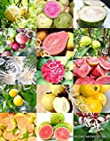 GUAVA FRUIT MIX tropical EDIBLE good guayaba rare Psidium guajava seed 100 SEEDS