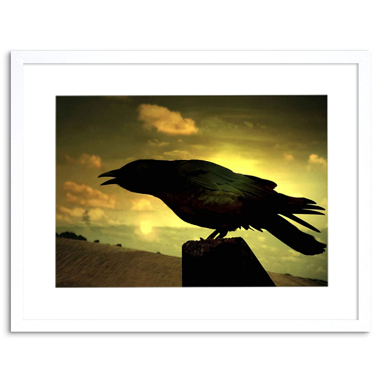 Amazon.com: PHOTO NATURE RAVEN SILHOUETTE BLACK BIRD FRAMED PRINT ...
