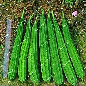 Amazon.com : Octagonal Loofah Melon Seed Green Towel Gourd Good ...