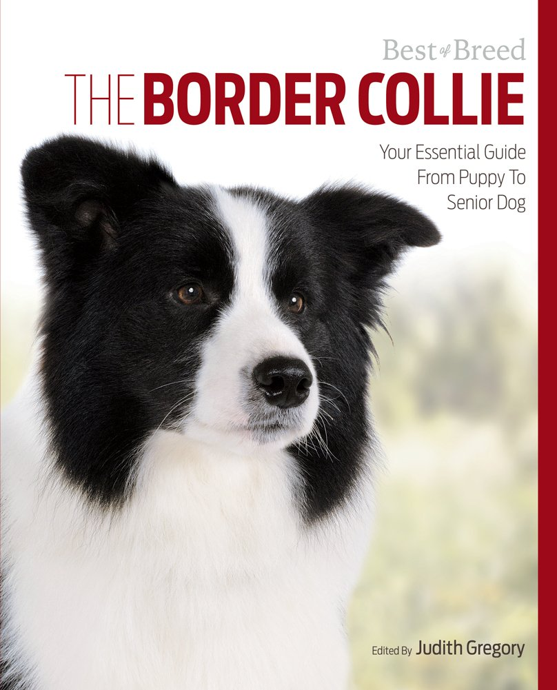 The-Border-Collie-Your-Essential-Guide-From-Puppy-To-Senior-Dog-Best-of-Breed