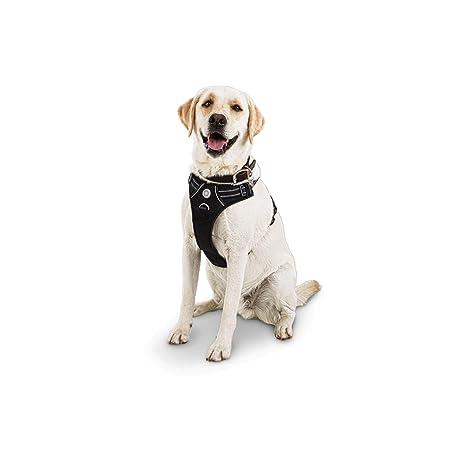 GOOD2GO Arnés para Perro, Color Negro: Amazon.es: Productos para ...