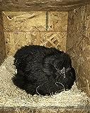 MagJo Pet Natural Aspen Shaving Nesting Liners
