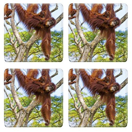 Orangutan Swings - 8