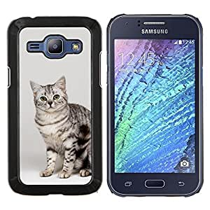 YiPhone /// Prima de resorte delgada de la cubierta del caso de Shell Armor - Gato egipcio de Mau Bengala Bobtail - Samsung Galaxy J1 J100