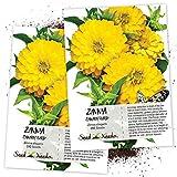 Seed Needs, Canary Bird Zinnia (Zinnia elegans) Twin Pack of 250 Seeds Each
