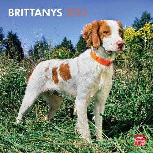 Spaniel 2013 Calendar - Brittanys 2013 Calendar (Multilingual Edition)