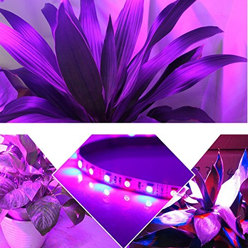 ZHENWOFC 1 Mt 2 Mt Mt Mt 3 Mt 4 Mt 5 Mt 3  1 5050 SMD LED wasserdichte Wasserkulturanlage wachsen Streifen Licht DC12V Innenlicht (Farbe   Length 4M) B07N5G65S9 | Schöne Kunst  1d94b6