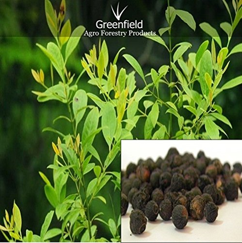 20 Seeds Best Quality White Indian Sandalwood Tree Seeds (Santalum album),Fresh Seeds,Free Shipping (B072NB69BK) Amazon Price History, Amazon Price Tracker