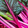 Swiss Chard Garden Seeds - Pink - Non-GMO, Heirloom Vegetable Gardening & Microgreens Seeds