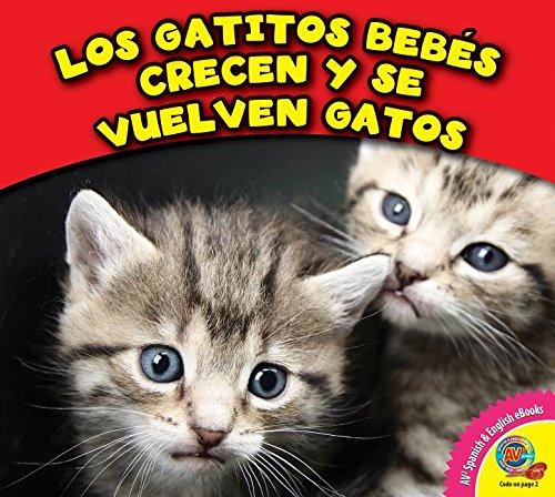Los Gatitos Bebes Crecen y Se Vuelven Gatos Los animales crecen ...