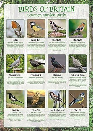 Birds Of Britain Poster Common Garden Birds Paper Laminated