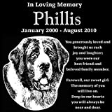 Personalized Saint Bernard Dog Pet Memorial 12''x12'' Engraved Black Granite Grave Marker Head Stone Plaque PHI2