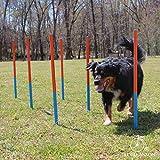 Lord Anson Dog Agility Set - Dog Agility