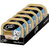 Cesar Premium Adult Wet Dog Food, Salmon & Potato, 6 Trays (6x100g)