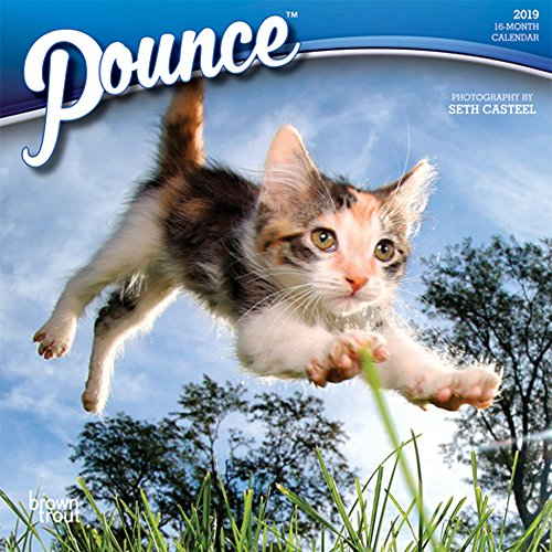 Pounce 2019 7 x 7 Inch Monthly Mini Wall Calendar, Cats Pouncing (English, Spanish and French Edition)