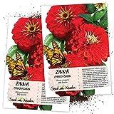 Seed Needs, Cherry Queen Zinnia (Zinnia elegans) Twin Pack of 250 Seeds Each