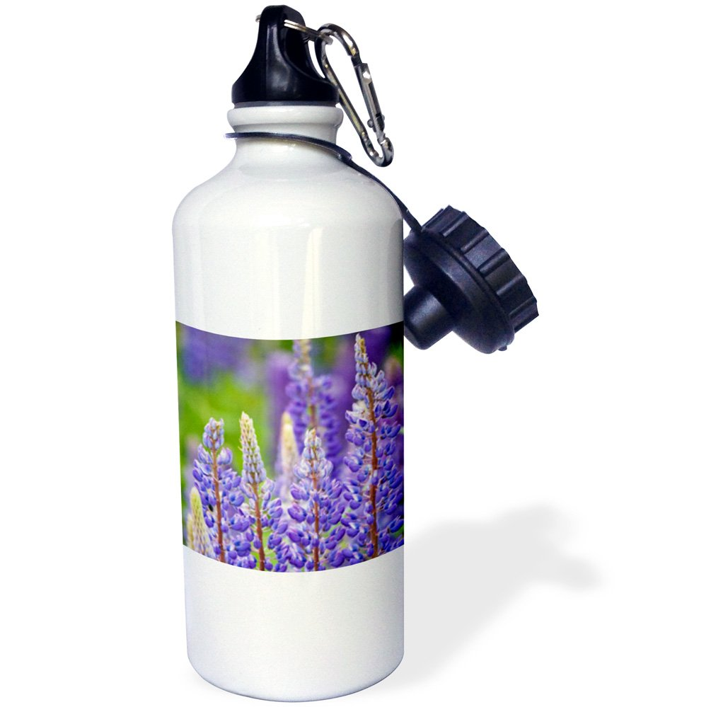3dRose wb_72140_1''Canada, Prince Edward Island, Lupine flowers-CN09 DBR0075 Dave Bart ruff'' Sports Water Bottle, 21 oz, White by 3dRose