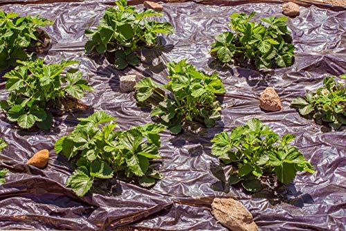 alta resistencia a los rayos UV negro Malla para las malas hierbas del jard/ín 50/m x 1/m resistente Grosor: 130/g//m/²/ 50/m/²