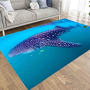 EMMTEEY 5x7 Farmhouse Area Rug of Indoor Outdoor Kids,Boys,Girls Area Rug Use Whale Shark The Biggest Fish in Ocean Huge Gentle Giant Swimming Near Surface California Mexico Typus a Plankton Filterer