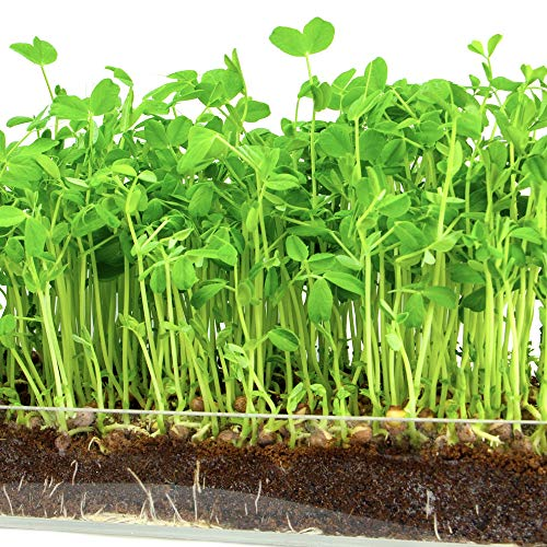 "Microgreen Organic Pea Shoot 3 Pack Refill–Pre-measured Soil + Seed, Use with Window Garden Multi-Use 15"" x 6"" Planter Tray. Easy and Convenient, Enough to Sprout 3 Crops of Superfood."