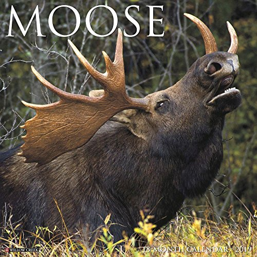 Moose 2019 Wall Calendar