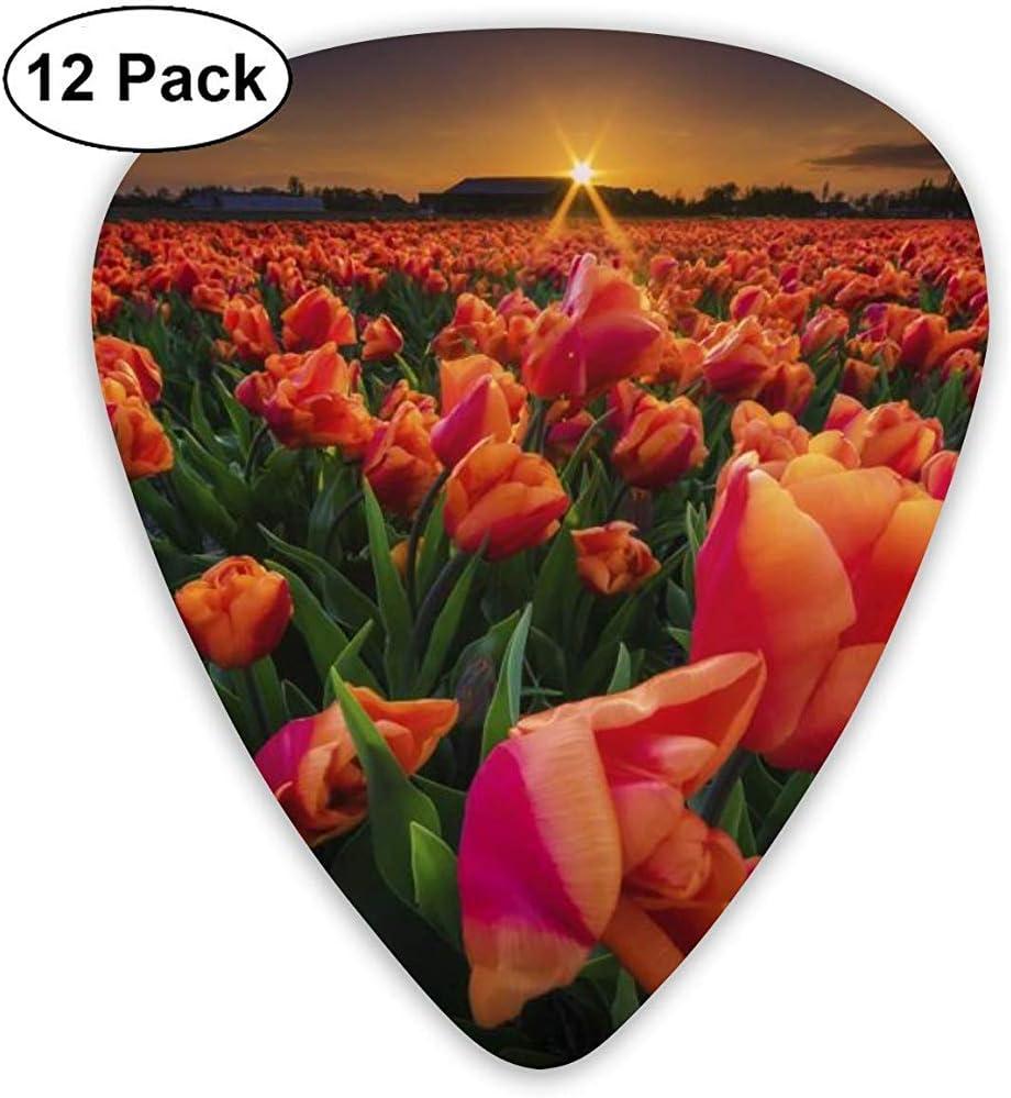 Sunrise Red Flower Guitar Pick Set Guitarra Bajo Mandolin Ukulele 0.46mm 0.71mm 0.96mm 12 Pack Guitar Picks Plectrums Picks Holder