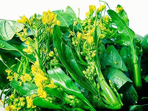 Organic (1000 Seeds) Green Bok choy-pak choi-pak choy-chard- No GMO Vegetable Seeds + Free Thai Food - Green Choy Bok