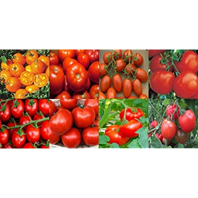 Pure Pollination 8 Tomato Variety Seed Pack Heirloom Garden Open Pollinated Non-GMO : Garden & Outdoor