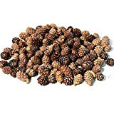 Floral Fantacy Spruce Pine Cones Vase Fillers, Table Scatter, Crafts 8-Ounce (Brown)