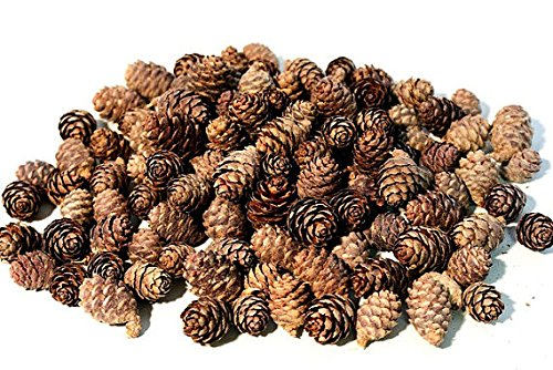 Floral Fantacy Spruce Pine Cones Vase Fillers, Table Scatter, Crafts 8-Ounce (Brown Pine - Pinecone Desk