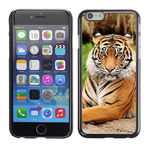 "Premio Sottile Slim Cassa Custodia Case Cover Shell // V00003935 tigre assis majestueux // Apple iPhone 6 6S 6G 4.7"""