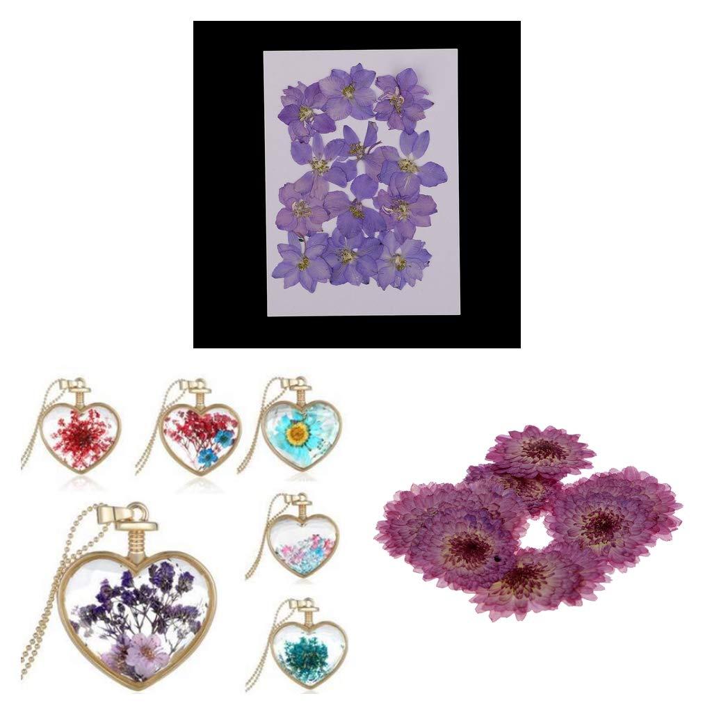 Prettyia 22 Pieces Purple Daisy Larkspur Dried Pressed Flowers Handmade Real Flowers Case Phone Decoration DIY