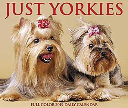 Just Yorkies 2019 Box Calendar Dog Breed Calendar Willow Creek