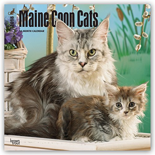 Maine Coon Cats 2018 12 x 12 Inch Monthly Square Wall Calendar, Animals Cats Pet Kitten Feline