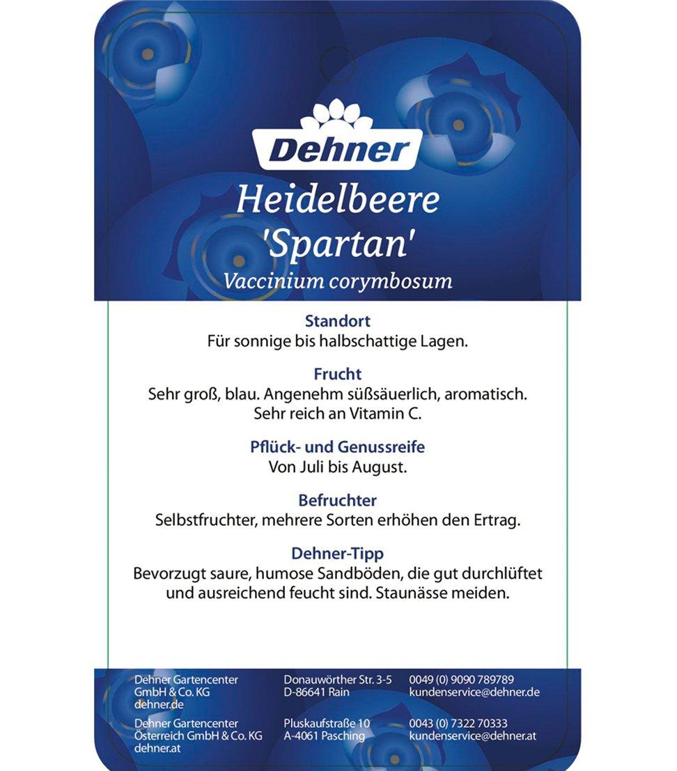 Beerenobst / aromatisch 55-65 cm 3 l Topf Dehner Gourmet Garten Heidelbeere Spartan ca