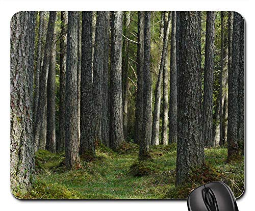 - Mouse Pad - Larch Forest Forest Larch Tree Trunks Strains 3