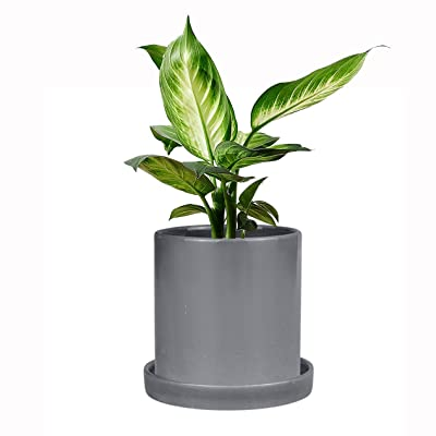 Ceramic Plant Pot Grey Flower Pot - 5 Inch Flower Planter for Indoor Plants Flower Succulents with Drainage Hole & Saucer : Garden & Outdoor