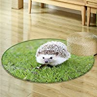 Non Slip Round Rugs Lovely hedgehogs on the grass Oriental Floor and Carpets -Round 47