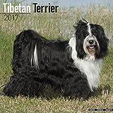 Tibetan Terrier Calendar 2017 - Dog Breed Calendars - 2016 - 2017 wall calendars - 16 Month by Avonside