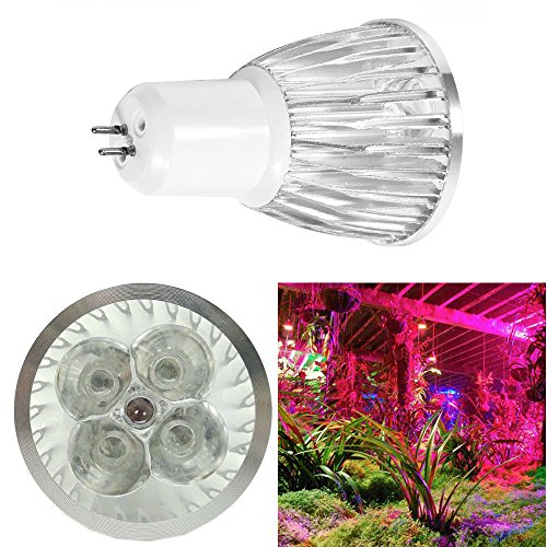 Growing Food Under Led Lights